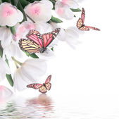 White tulips with butterfly — Stock Photo