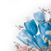 Blue tulips — Stock Photo