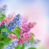 Lilac background — Stockfoto
