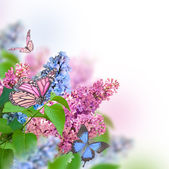 Branch of lilac with butterflies — Stockfoto