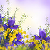 Blue irises with yellow daisies — Stockfoto