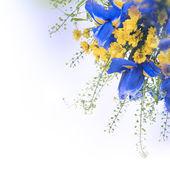 Blue irises with yellow daisies — Stock Photo