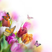 Delicate tulips with butterflys — Stockfoto