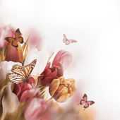 Delicate tulips with butterflys — Stok fotoğraf