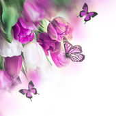 Delicate tulips with butterflys — Foto Stock