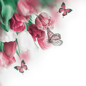 Delicate tulips with butterflys — Stock Photo