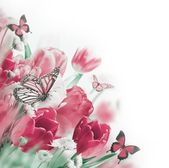 Delicate tulips with butterflys — Стоковое фото