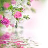 Bouquet de roses — Photo