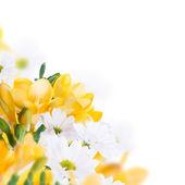 Primrose and daisies — ストック写真