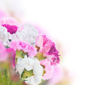 Floral background — Stock Photo