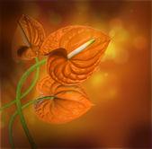 Calla on orange — Stock Photo