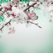 Apricot flowers with butterflies — Stock Photo #46611547