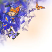 Blue irises with yellow daisies with butterflies — Stock Photo