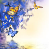 Blue irises with yellow daisies with butterflies — 图库照片