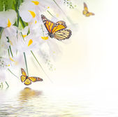 Yellow  irises with yellow daisies with butterflies — 图库照片