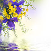 Blue irises with yellow daisies — Stock Photo