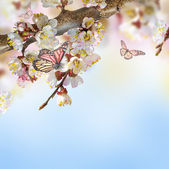 Apricot flowers with butterflies — Stock Photo