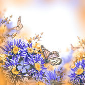 Spring chrysanthemum with butterflies on blue — Stock Photo