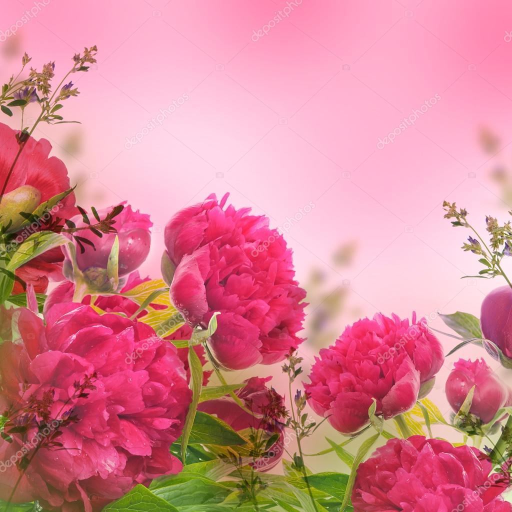 Peonie rosa su rosa foto stock seqoya 46610735 for Peonie periodo
