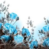 голубые розы — Стоковое фото