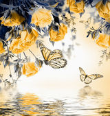 Yellow roses with butterflies — Stock Photo