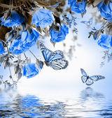 розы и бабочки — Стоковое фото
