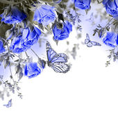 Blue roses and butterfly — Stock Photo