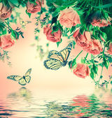Roses and butterflies — Stock Photo