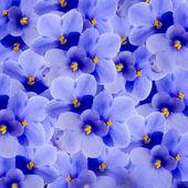 Lente viooltjes — Stockfoto