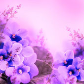 Violets background — 图库照片