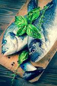 Dorado fishes — Stockfoto