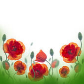 Red poppies field, — Stock Photo
