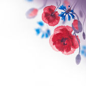 Poppies and cornflowers background — Foto de Stock
