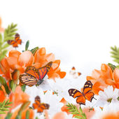 Primroses and butterflies — Stockfoto