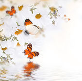 Marguerites et papillons — Photo