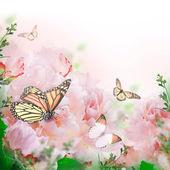 花卉背景 — 图库照片