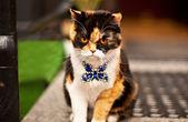 Very aggressive cat on street — Stock Photo