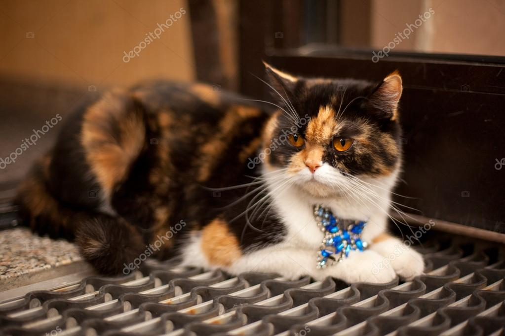 Young cat in the street — Stock Photo #13620748