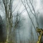 sombre forêt avec brouillard et de lumière froide — Photo
