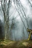 темный лес с туман и холодный свет — Стоковое фото