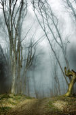 Dark forest with fog and cold light — Stockfoto