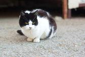 Little fluffy kitten on the street — Stock Photo