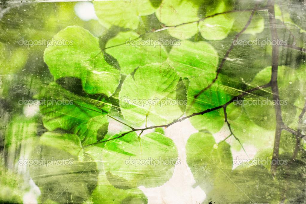 绿色的树叶复古背景上 - 图库图片