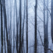 Dark forest with fog and cold light — Foto Stock
