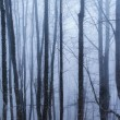 Dark forest with fog and cold light — Lizenzfreies Foto