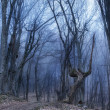 Stock Photo: Dark forest with fog and cold light