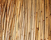 Bamboo background — Stockfoto