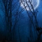 nuit noire forêt agaist pleine lune — Photo