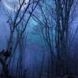 Photo: Dark night forest agaist full moon
