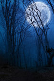Dark night forest agaist full moon — Stock Photo